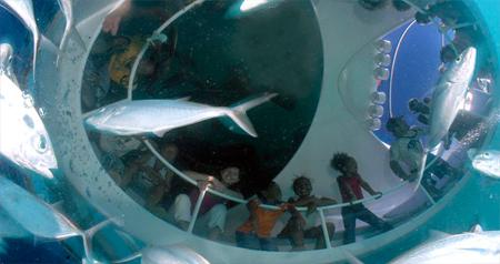 Лодка Looker со стеклянным дном